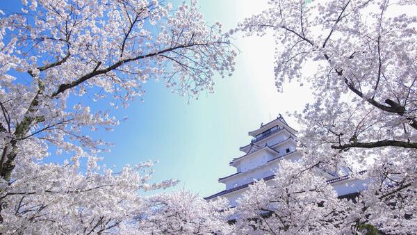 転職エージェント-福島-企業ランキング