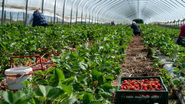 <画像>岩手で農業を始めたい人におすすめの求人サイト